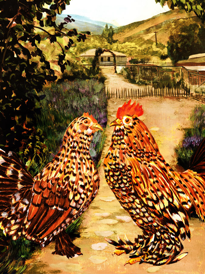 Book Cover for Chicken keeping